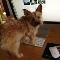 Friday Five: 5 Reasons We Love Having Office Dogs in Honor of Take Your Dog to Work Day
