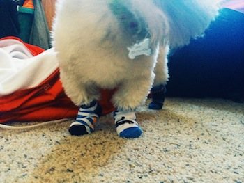 Zippy the Newest Dynadog - Zippy in Socks