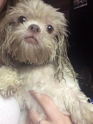 Zippy the Newest Dynadog - Zippy After the Shower