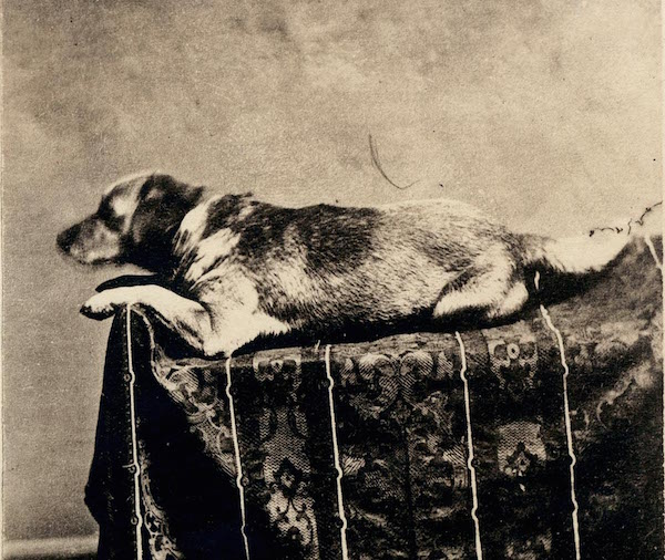 TBT Fun Lincoln Facts - Fido