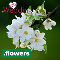 Launching TLDs : .WEDDING Domain Launch : .FLOWERS Domain Launch : Domain Registration - .FLOWERS Domain Logo - .WEDDING Domain Logo