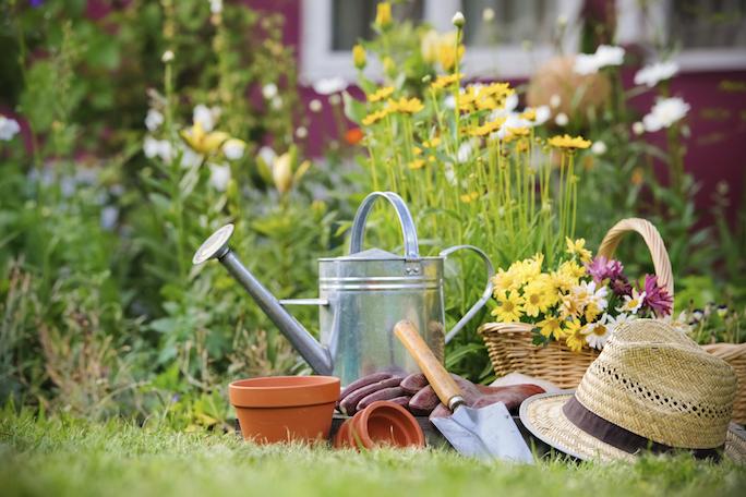 Gardening Tips : Rarest Flowers : .FLOWERS Domain Sale : Register .FLOWERS Domains - Garden