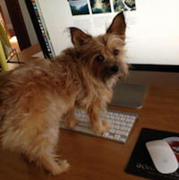 Take Your Dog to Work Day : New Dynadog : Introducing Bear - Gracie