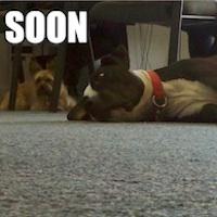 Dynadot Celebrates Take Your Dog to Work Day