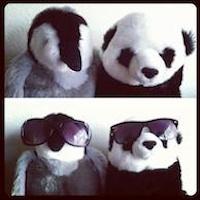 MozCon SEO Tips from Dynadot - Penguin & Panda Google Updates