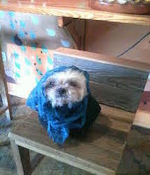 Pick A Cute Costume And Enjoy Dress Up Your Pet Day: Check Out Pictures Of Our Dynapets Today - Grubnub