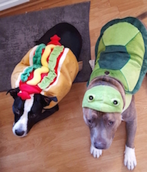 Pick A Cute Costume And Enjoy Dress Up Your Pet Day: Check Out Pictures Of Our Dynapets Today - Leela and Chubbs