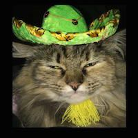 Pick A Cute Costume And Enjoy Dress Up Your Pet Day: Check Out Pictures Of Our Dynapets Today - Scruffy