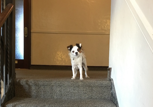 Dynadot Dog