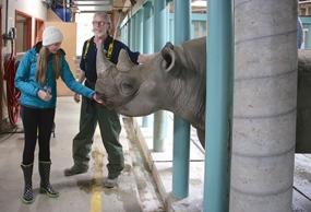 Robyn Norgan Rhino Unicorn Website