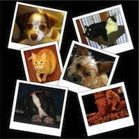 Register Your Domain Name on Love Your Pet Day