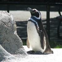 Blog SEO Tips Post-Penguin Google Update - .ME Sale Blog Domain - Penguin Day