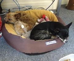 Best Sites for Integrating a Dog into Your Life! - Best Dog Websites