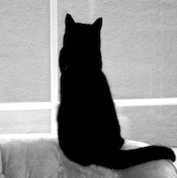 Friday the 13th Spooky Black Cat - Spooky Websites