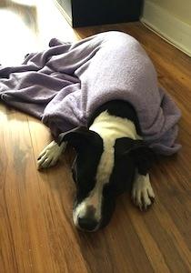 Leela Dyna Dog - Love Your Pet Day
