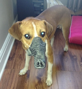 Tiger Dyna Dog Goofing Off on Love Your Pet Day